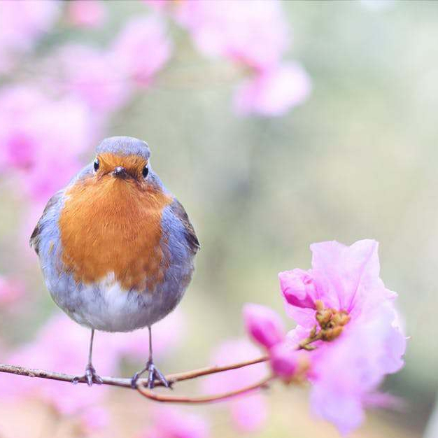 Big Schools' Birdwatch